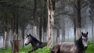 Horses inside a forest near the ruins of the Greek and Roman city in Shahhat, Libya