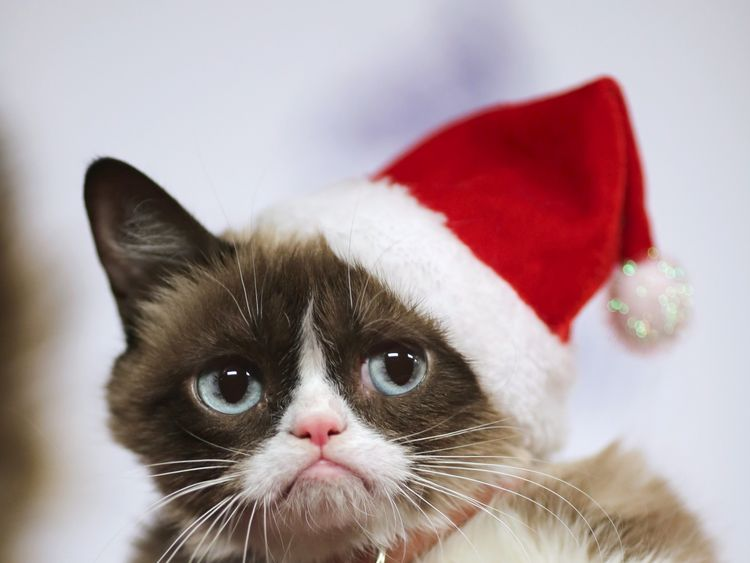 Grumpy Cat arrives to ride in the 84th Annual Hollywood Christmas Parade in the Hollywood section of Los Angeles, California, November 29, 2015