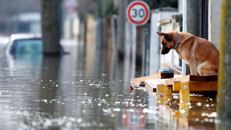 A dog looks on as water rises in Villeneuve-Saint-George
