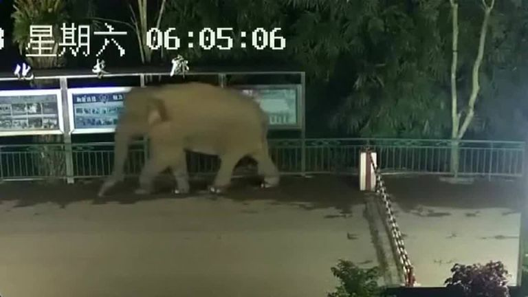 An elephant passed through a border crossing between Laos and China and then returned two hours later.