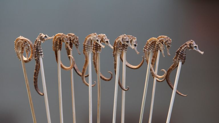 Seahorse is sold as snacks on sticks (file pic)