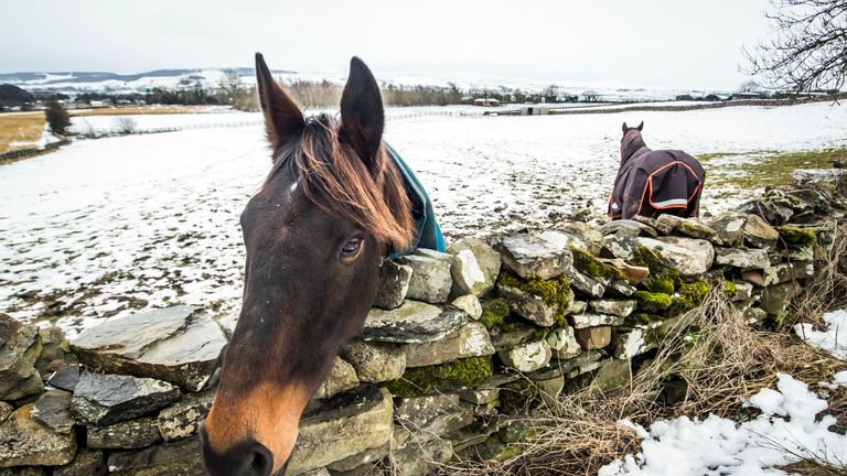 A horse in snowy conditions near Swinithwaite in the Yorkshire Dales National Park