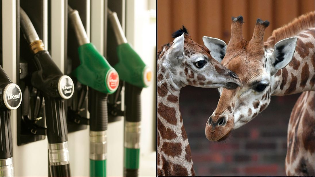 Petrol pumps and giraffes