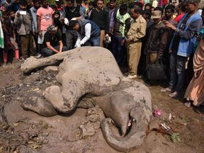 Indian villagers look at an injured elephant which is being hit by a train near Habaipur railway station in Hojai district, some 180 km from Guwahati, on February 11, 2018