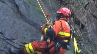 A dog trapped on a 50-foot ledge in Swansea  was reunited with his owners after being rescued by members of the RSPCA and the fire service.  During the start of the rescue operation, the RSPCA noted, an earthquake was recorded in the Bristol Channel, the shock waves of which were felt in Swansea and further afield.  The dog, named Basil, was able to be reunited with his owners as he was microchipped, something which the RSPCA encourages.