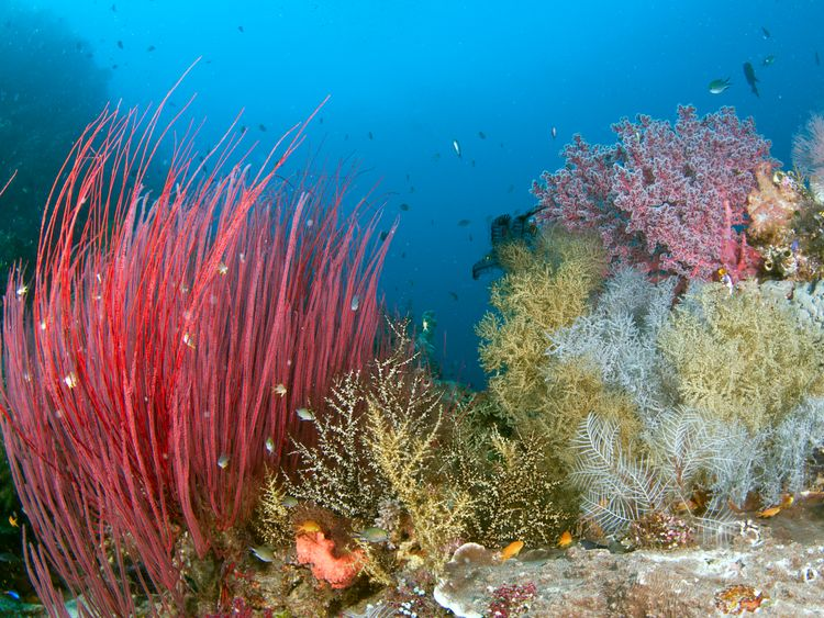 Coral reefs like this one in Indonesia are under threat. Pic: Jayne Jenkins