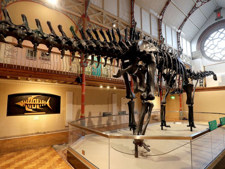 The Natural History Museum's Diplodocus skeleton cast, known as Dippy, is installed at Dorset County Museum in Dorchester, the first stop on a UK tour. PRESS ASSOCIATION Photo. Picture date: Friday February 9, 2018. See PA story SCIENCE Dippy. Photo credit should read: Andrew Matthews/PA Wire