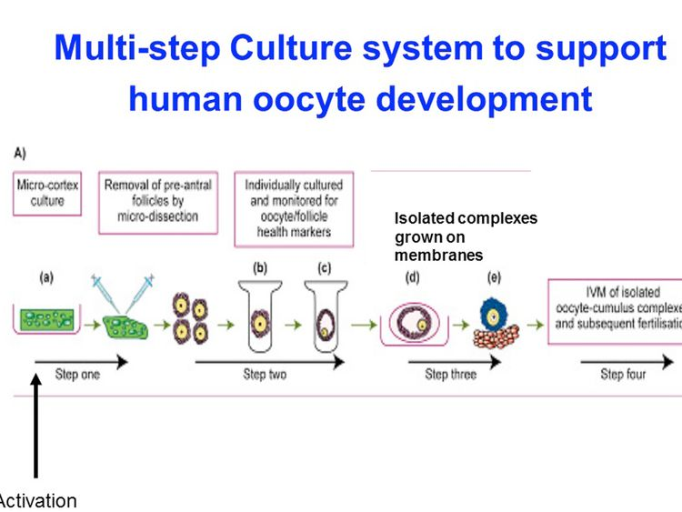 Schematic image of human egg development in laboratory. Step one: very small, immature human eggs within ovarian tissue are placed in culture in the lab, and begin to develop Step two: after initial development, eggs have grown and are more than double their initial size. The ovarian follicles that contain the eggs are separated before further growth and monitoring Step three: eggs and their surrounding cells are removed from liquid culture to undergo further development in a nutrient-rich membr