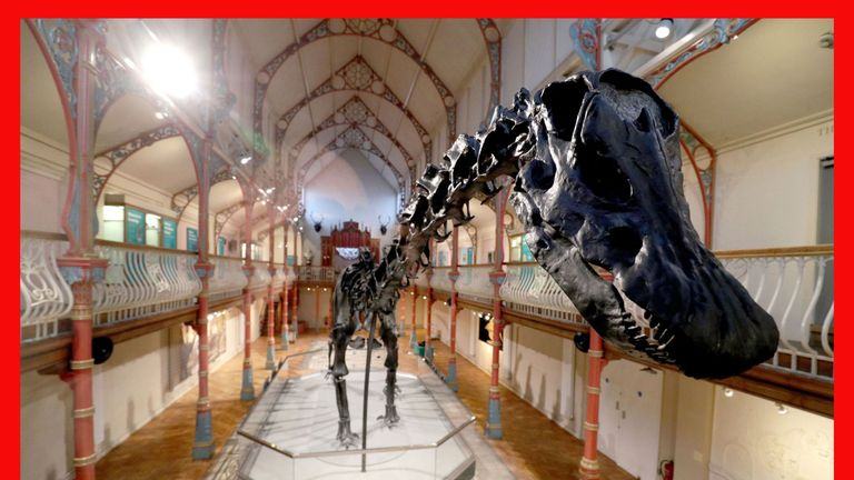 PABest The Natural History Museum's Diplodocus skeleton cast, known as Dippy, is installed at Dorset County Museum in Dorchester, the first stop on a UK tour. PRESS ASSOCIATION Photo. Picture date: Friday February 9, 2018. See PA story SCIENCE Dippy. Photo credit should read: Andrew Matthews/PA Wire
