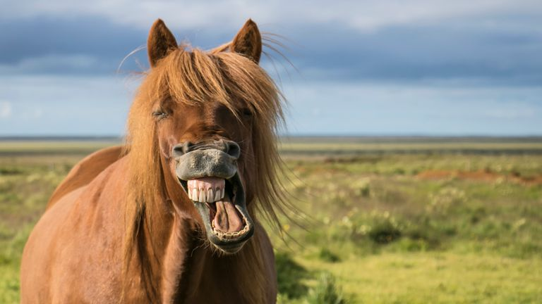 Generic horse laughing and smiling