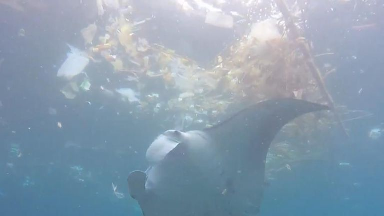 A video shared to Facebook on February 16 shows a manta ray feeding among pieces of trash at Manta Point in Bali.