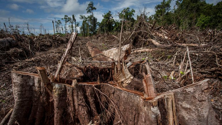Orangutan's habitats were being lost to logging and palm oil production
