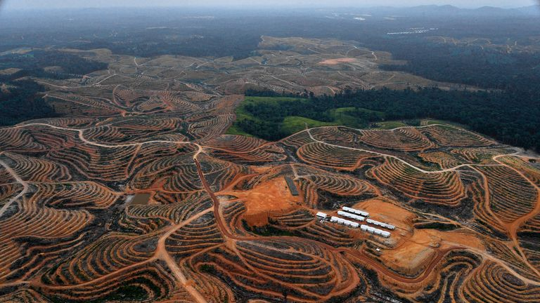 Swathes of forest on Borneo has been destroyed to produce palm oil