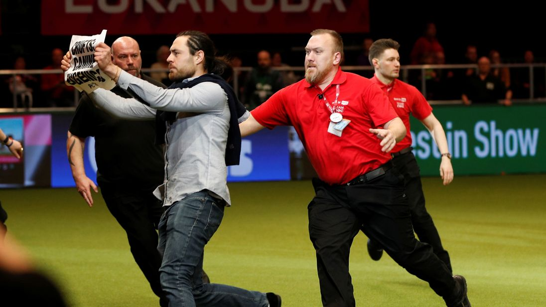 Security guards chase a protester who entered the Crufts ring