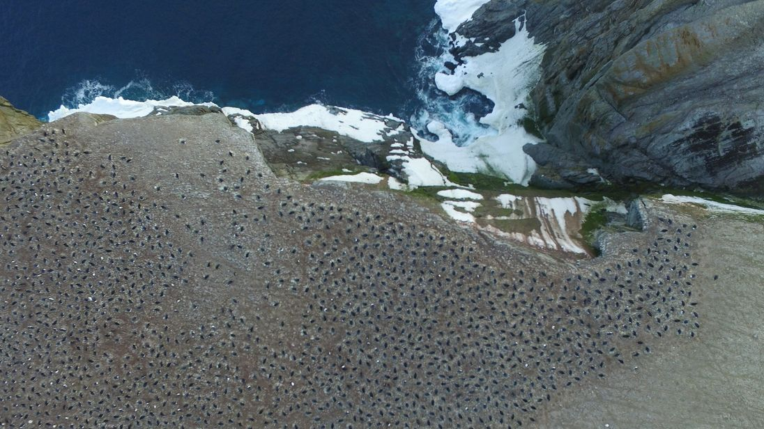 Researchers from the Woods Hole Oceanographic Institution discovered a massive colony of over 1.5 million Adélie Penguins a species previously thought to be on the decline in Antarctica's Danger Islands. Their study was released on March 2