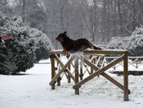 A dog jumps off a wooden fence in Sempione garden after snowfall in Milan, Italy