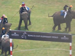 Elephants at the King's Cup Elephant Polo tournament were abused video footage shows