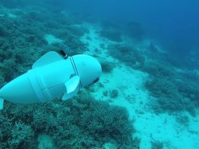 The robot fish can swim alongside real ones. Pic: MITCSAIL