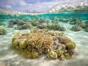 A picture shows coral reefs in the lagoon of the Toau atoll, about 400 kilometres (250 miles) from Tahiti in the Tuamotu Archipelago in the French polynesia, on October 18, 2015