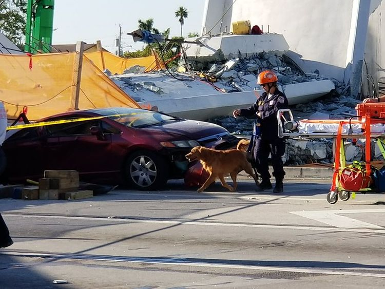 Sniffer dogs are aiding the search and rescue. Pic: Miami Fire and Rescue