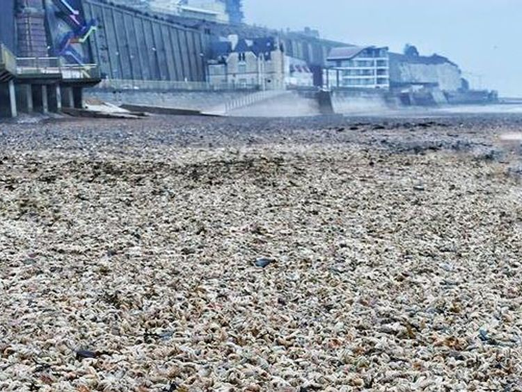Starfish 'Armageddon' as thousands wash up on beach