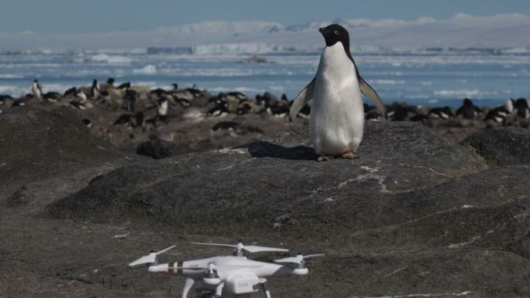 "Danger Islands Expedition Image (4): ""An Adélie penguin and Quadcopter on Brash Island, Danger Islands, Antarctica"" Pic: Stony Brook University"