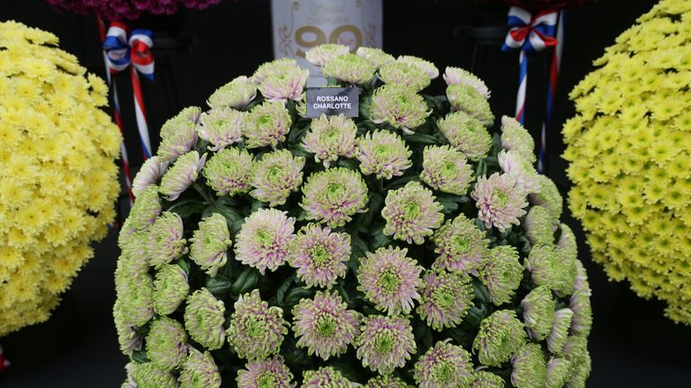 A flower named Rossano Charlotte in honour of Princess Charlotte