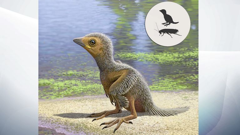 An artist's impression of Enantiornithes. Pic: Raul Martin