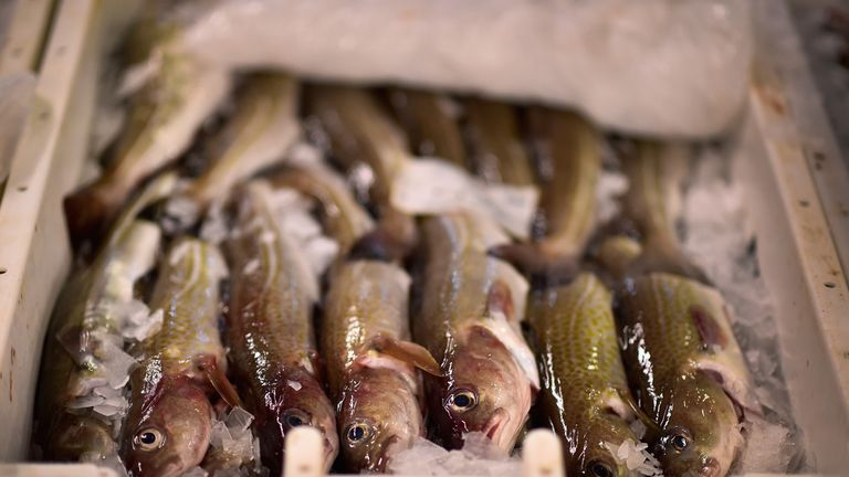 Cod is on display to be sold at Peterhead fish market