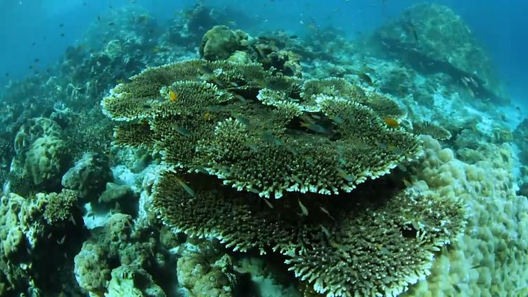 Since the film was made, up to 80% of the coral in the bay has died