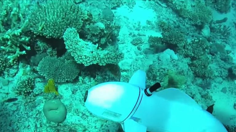 US scientists have developed a robotic fish