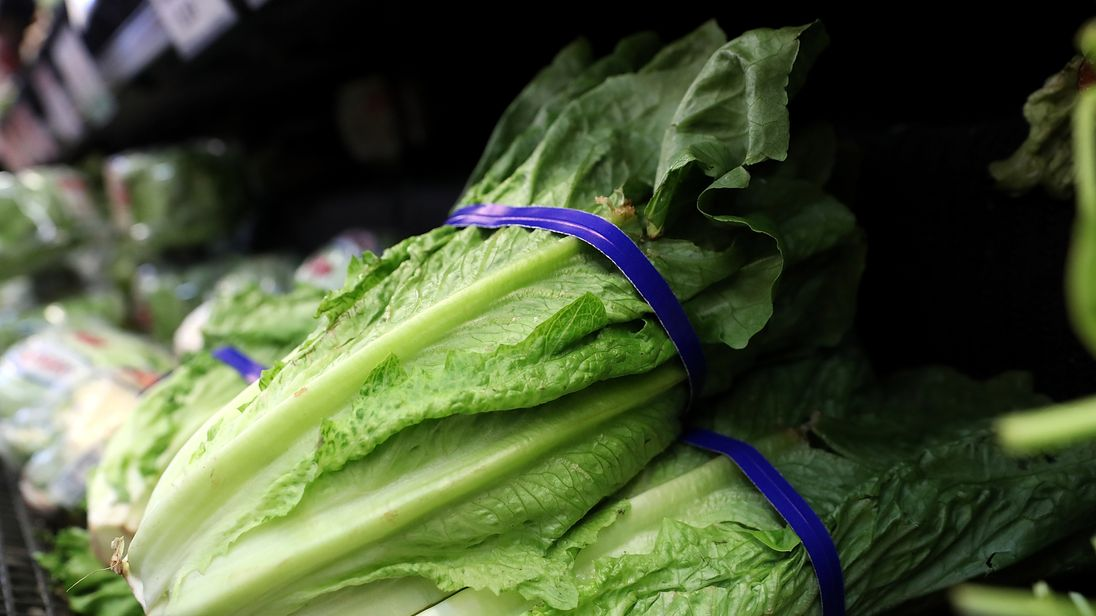 Romaine lettuce is thought to be the potential source of an E. Coli outbreak in America