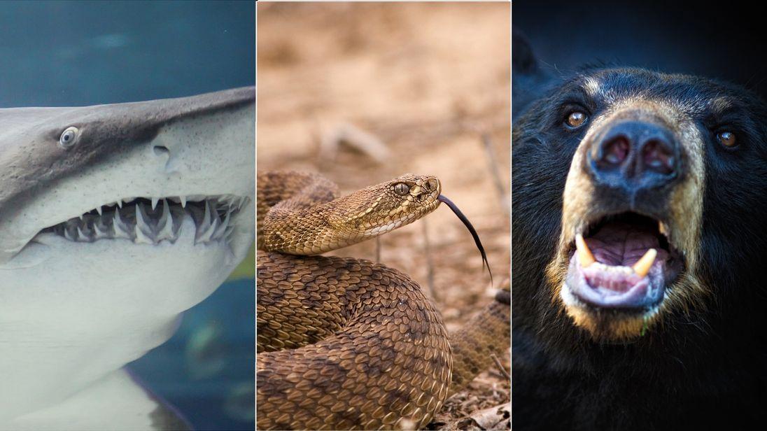 composite of snake, shark, bear
