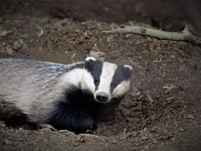 The castle is open again after the badger left. File pic