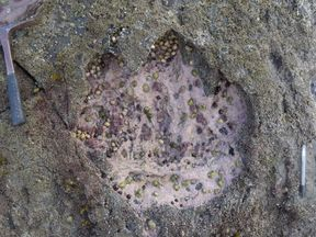 Sauropod footprint discovered in Scotland. Pic: Paige dePolo