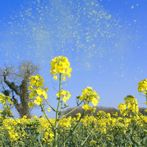 Top tips to ease your hay fever symptoms