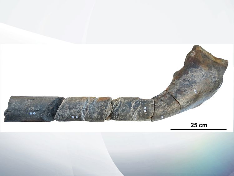 Jawbone fossil found in UK belongs to giant sea monster