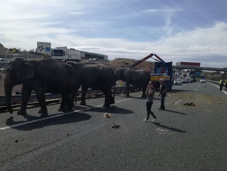 Spain: Elephants roam highway after one killed in truck crash