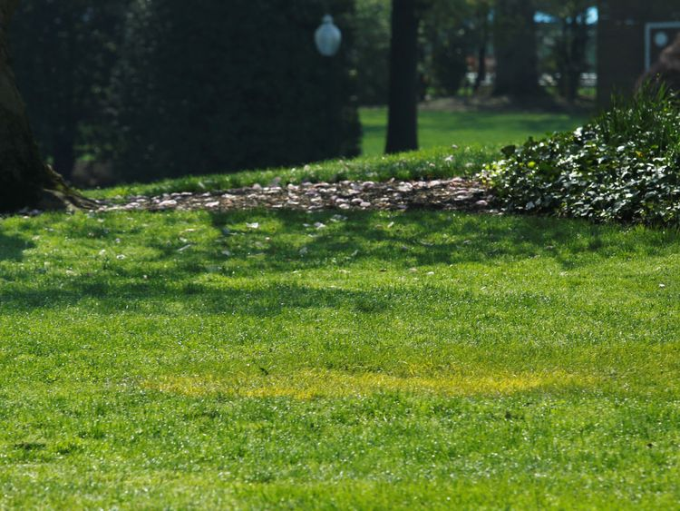 A yellow spot is seen where the tree planted by Emmanuel Macron and Donald Trump stood on the South Lawn of the White House