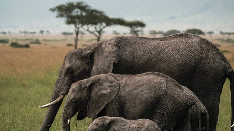 The UK will introduce on the world's toughest ivory trade bans, the Government says.