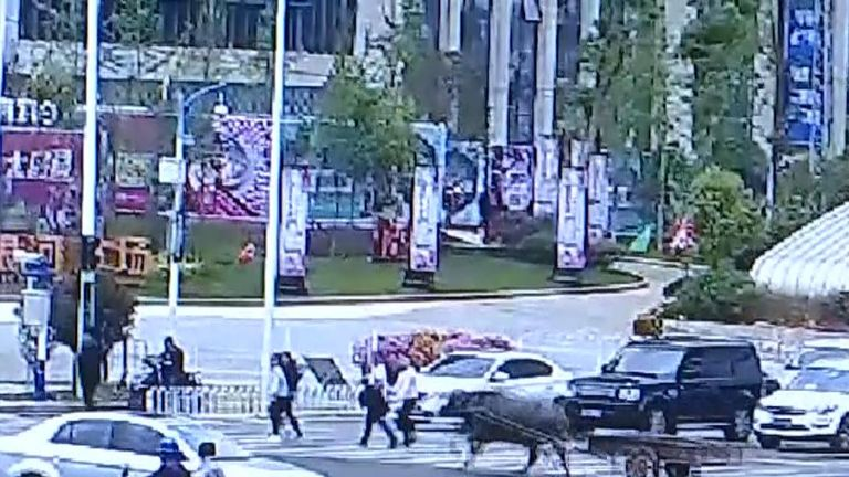 A runaway ox left pedestrians and motorists utterly bewildered in southwest China's Yunnan Province, after the animal ditched its owner and took its cart for a high-speed city tour.