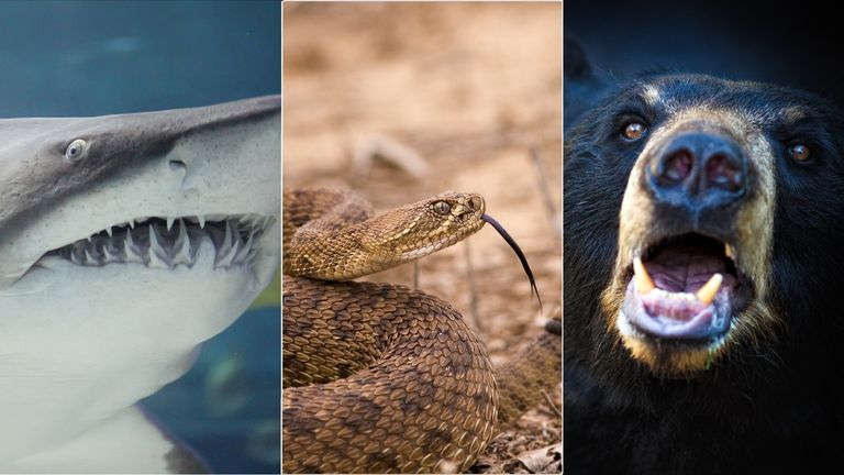 composite of snake, shark, bear