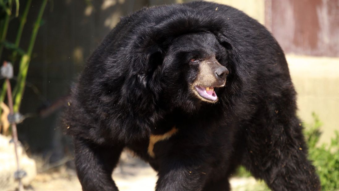 Colorado bear killed by officers responsible for attack on girl