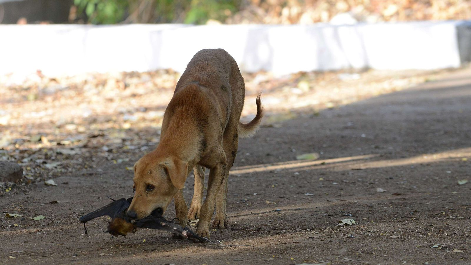 dog with rabies - 1280×640