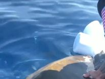 Coast Guardsmen rescued a turtle who they spotted in distress while on a counter-narcotics operation in the eastern Pacific Ocean,