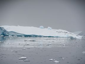 An iceberg floats in Andvord Bay, Antarctica