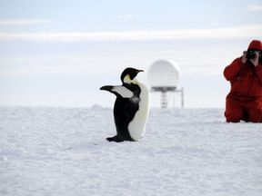 Penguins are under threat from climate change, researchers say