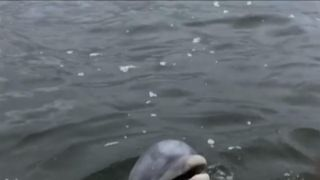 A curious dolphin surprised a man and his grandson during a fishing trip on the Wando River in South Carolina on May 6.