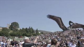Two pelicans decided to crash a graduation ceremony at Pepperdine University in Malibu, California on April 28, and were caught in the act on camera by school videographer Grant Dillion.