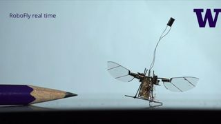 Engineers at the University of Washington have created RoboFly, the first wireless flying robotic insect. This might be one small flap for a robot, but it's one giant leap for robot-kind